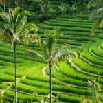 bali rice terrace sightseeing