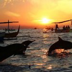 bali lovina dolphin watching tour